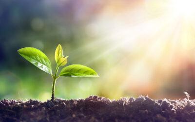 Planter bliver – også – hvad de spiser